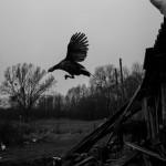 fot. M. Rigamonti